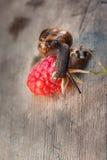 Lumaca di giardino, helix aspersa sui lamponi rossi Fotografia Stock