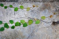 Lumaca di verde della foglia di Wallleaves Immagini Stock Libere da Diritti