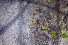Lumaca di verde della foglia di Wallleaves Fotografia Stock