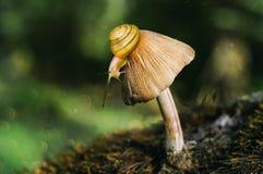 Lumaca e fungo Fotografia Stock Libera da Diritti