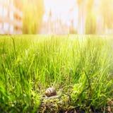 Lumaca in erba alta su fondo della città Fotografia Stock
