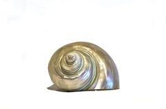 Lumaca isolata della perla Fotografia Stock Libera da Diritti