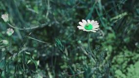 Lumaca nel paese delle meraviglie verde Fotografia Stock Libera da Diritti