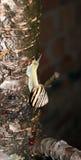 Lumaca rampicante Immagini Stock