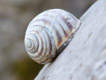 Lumaca Shell Weathered immagini stock libere da diritti