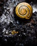 Lumaca a spirale Fotografie Stock