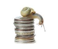 Lumaca su soldi Fotografia Stock