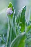 Lumaca su una foglia verde Fotografie Stock Libere da Diritti