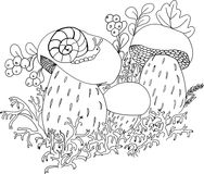 Lumaca sui grandi funghi Immagine Stock Libera da Diritti