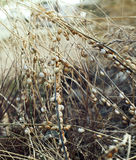 Lumaca sull'erba fotografia stock libera da diritti