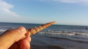 Lumaca sveglia nella spiaggia Fotografia Stock