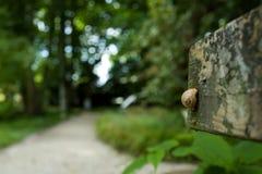 Lumaca in un giardino botanico Immagine Stock Libera da Diritti
