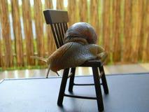 Lumache dell'uva con la mobilia della bambola Fotografia Stock Libera da Diritti