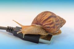 Lumache ed il concetto di Internet lento immagini stock libere da diritti