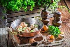 Lumache fresche con i hebrs ed il burro di aglio Fotografie Stock