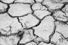 Lumache sulla terra asciutta Immagine Stock