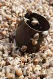 Lumache viventi da vendere su un servizio i Tunisia. fotografie stock