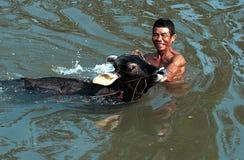 Lumajang. Farmers and cattle bathe in the river at Lumajang, East Java, Indonesia. Photo teken on September 4th, 2004 Stock Image