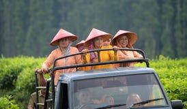 Lumajang Royalty Free Stock Photos