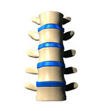 Lumbar Spine - Anterior view. / Front view Royalty Free Stock Image