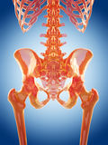 The lumbar spine Royalty Free Stock Images