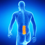 The lumbar spine Royalty Free Stock Image