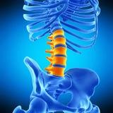 The lumbar spine Stock Photo