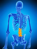 The lumbar spine Royalty Free Stock Photos