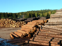 Lumber. Spruce logs on a saw mill Royalty Free Stock Images