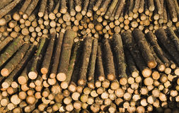 Lumber. Stacks of newly felled logs in lumber yard Stock Photos
