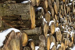 Lumber. Tree Trunks covered in snow Royalty Free Stock Image