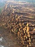 lumber foto de archivo