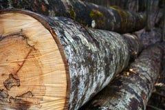 lumber photographie stock