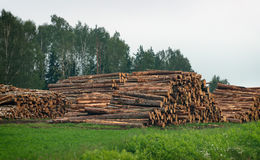 Lumber-camp. Stock Photos