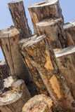 Lumber Cut Logs Royalty Free Stock Photography