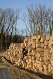 Lumber engineer Stock Photography