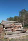 Lumber industry Royalty Free Stock Images