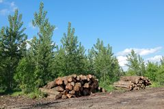 Lumber industry Royalty Free Stock Photo