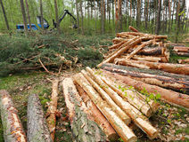 Lumber industry. Stock Photography