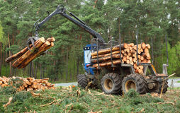 Lumber industry. Stock Photo
