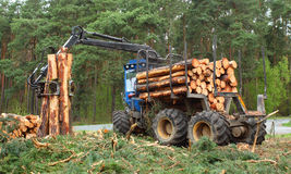 Lumber industry. Stock Images