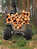 Lumber industry. Stock Photos