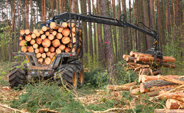 Lumber industry. Stock Image