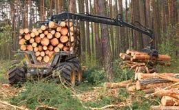 Lumber industry. Stock Image