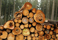 Lumber industry Royalty Free Stock Image