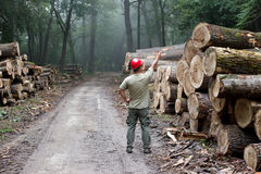 Lumber industry Stock Photography