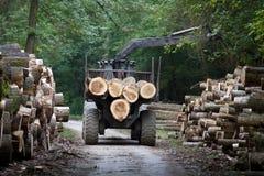 Lumber industry Stock Image