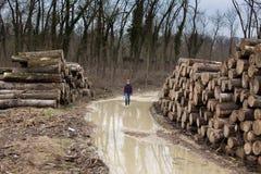 Lumber jack Stock Image
