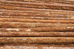Lumber Logs In A Pile Royalty Free Stock Image