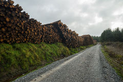 Lumber Logs stacked along forest road Stock Image